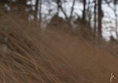 Wind (jannaheli) Tags: suomi finland helsinki laajasalo nikond7200 nature naturetherapy naturephotography naturephotoshooting outdoor visitfinland visithelsinki wind hay