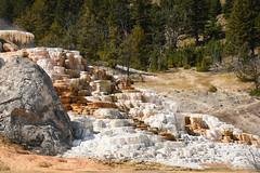 Palette Spring Hot Spring 02 (Amaury Laporte) Tags: geothermal geothermalfeatures mammoth mammothhotsprings nationalpark nature northamerica usa unitedstates wyoming yellowstone