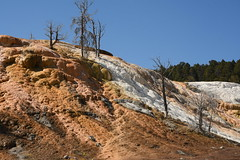 Palette Spring Hot Spring 01 (Amaury Laporte) Tags: geothermal geothermalfeatures mammoth mammothhotsprings nationalpark nature northamerica usa unitedstates wyoming yellowstone
