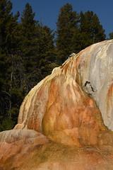 Orange Spring Mound 6 (Amaury Laporte) Tags: geothermal geothermalfeatures mammoth mammothhotsprings nationalpark nature northamerica usa unitedstates wyoming yellowstone