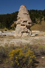 Liberty Cap and Flowers 1 (Amaury Laporte) Tags: geothermal geothermalfeatures mammoth mammothhotsprings nationalpark nature northamerica usa unitedstates wyoming yellowstone