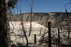 Dead Trees by Canary Spring (Amaury Laporte) Tags: geothermal geothermalfeatures mammoth mammothhotsprings nationalpark nature northamerica usa unitedstates wyoming yellowstone
