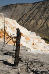 Dead Trees and Canary Spring Terraces 3 (Amaury Laporte) Tags: geothermal geothermalfeatures mammoth mammothhotsprings nationalpark nature northamerica usa unitedstates wyoming yellowstone