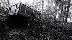Envahi de ronce (Un jour en France) Tags: noiretblanc noiretblancfrance black monochrome forêt abandonné nature campagne canoneos6dmarkii canonef1635mmf28liiusm eos