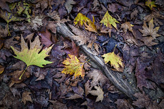 Back To The Roots 3 (panos_adgr) Tags: winter moods leaves colours nature water moisture textures nikon d850 travel photography