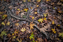Back To The Roots (panos_adgr) Tags: winter moods leaves colours nature water moisture textures nikon d850 travel photography
