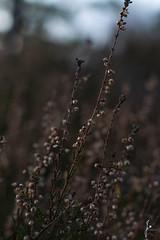 Heather (jannaheli) Tags: suomi finland helsinki laajasalo nikond7200 nature naturetherapy naturephotography naturephotoshooting outdoor visitfinland visithelsinki heather