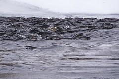 Boulder Creek (Boulder Flying Circus Birders) Tags: bouldercreekat75thst heatherwoodtrail bouldercountyopenspace gunbarrel colorado wildbirdboulder wildbirdcolorado boulderflyingcircusbirders freebirdwalk naturehike birdwatchinggroup birdinggroup saturdaymorningbirders birdphotography naturephotography stevefrye