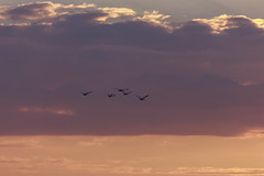 Towards the Sun #6 (axelord101) Tags: photography nature sunset birds clouds colors