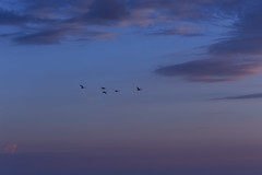 Towards the Sun #1 (axelord101) Tags: photography nature sunset birds clouds colors