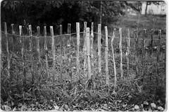 a fence (sebastel23) Tags: rolleiretro80s exposedlikeiso64 rodinal150 13min
