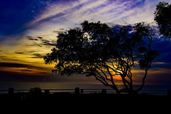01 (morgan@morgangenser.com) Tags: sunset pretty beautiful red orange colorful evening dusk clouds blue palmtree pacificpalisades bluff silhouette sun yellow cool photobymorgangenser trees windy colors people