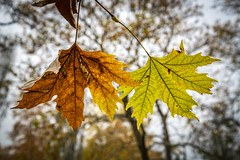 Together (panos_adgr) Tags: winter moods leaves colours nature water moisture textures nikon d850 travel photography