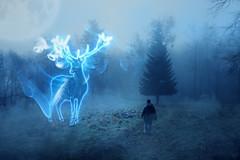 Patronuszauber (Gruenewiese86) Tags: harz nebel wald wernigerode canon6d expecto patronum hirsch deer mystical fairytale märchen märchenhaft