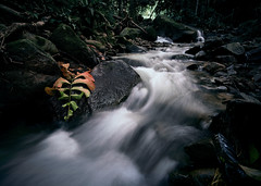 Stream (bdrc) Tags: kampungjandabaik pahang malaysia malaysianphotographer leofoto ls284c lh30r laowa zerod 15mm manual prime f2 ultrawide tripod stream river forest jungle outdoor flora fauna tree nature leaves leaf water motion slowshutter longexposure rock asdgraphy sony a7m3 a7iii fullframe mirrorless sonyimages sonyalpha sonyphotography sonyuniverse sonyalphauniverse sonyalphamy alphauniverse alphauniversemy alphaphotography alpha photography