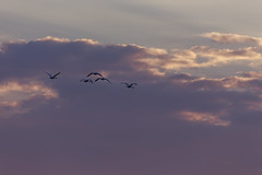 Towards the Sun #5 (axelord101) Tags: photography nature sunset birds clouds colors