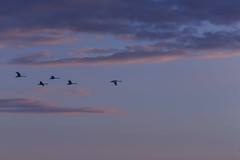 Towards the Sun #2 (axelord101) Tags: photography nature sunset birds clouds colors