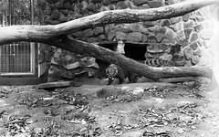 Parque Ecológico de Paulínia (Eu tirei uma Foto - www.eutireiumafoto.com.br) Tags: agfa apx 400 analógico animais filme 35mm fotografia analógica iso natureza nikon fm10 pb parque pessoas paulínia brasil brazil bw analogue photography