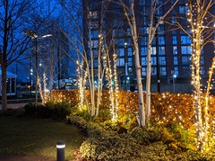 Illuminated trees at Mediacity on Salford Quays (Tony Worrall) Tags: manchester salford salfordquays trees night festive xmas christmas annual dark urbannature plants glow lit lights buy sell sale bought item stock ilobsterit instagram dailyphoto nice scene mediacity yellow colour colourful english british north west northern northwest venue visit visitors tourists location