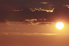 Towards the Sun #7 (axelord101) Tags: photography nature sunset birds clouds colors