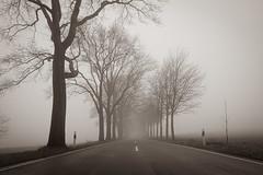 Straße im Nebel (Nic2209) Tags: nikond750 nic2209 flickr2019 flickr 2019 allemange alemania europa deutschland germany ruhrgebiet ruhrpott westfalen ninis ninicrew sonydsc100rxm2 sony nebel bäume morgens licht schatten fog