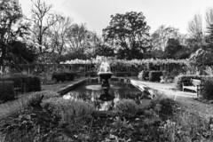 Old English Garden, Battersea Park (Bryan Appleyard) Tags: garden english battersea london park fountain pond bench trees