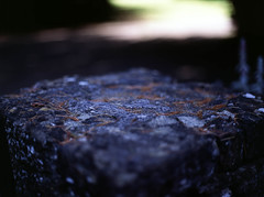Pine Needles (RunnyInHongKong) Tags: fujiprovia100f mediumformat opticfilm120 england 6x45 mamiyasekor80mmf19 wiltshire beechfieldhouse uk mamiya645protl vuescan film positive