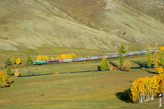Train No:305... (N.Batkhurel) Tags: season autumn trains trainspotting transport trees birch passengertrain railway railfan rzd railroad locomotive mongolia monrailpic m62um ngc nikon nikondf nikkor natur 24120mm