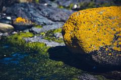 I hear your soft voice calling to me (.KiLTЯo.) Tags: kiltro cl chile tierradelfuego magallanes timaukel patagonia rock liquen lichen yellow sea shore alga algae seaweed shadow nature green