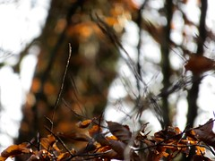 Herbstbokeh (doro 51) Tags: herbst autumn bokeh wald forest dorophoto 2019