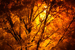 The Fire (HW111) Tags: autumn blur branches leaves lights longexposure streetlight tree trees windy wisdomteachings tmt night