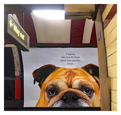 The New Direction for Plastic! (The Stig 2009) Tags: thestig2009 thestig stig 2009 2019 tony o tonyo dog poster london underground ban plastic out way sign tube apple iphone 8 plus