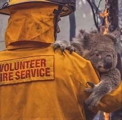 Australia - 2019 fires - Koala population almost wiped out (Big Brisbane Boy) Tags: australia 2019 fires bush koala bear firemen save