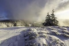 Crête vosgienne (ducatst2) Tags: hiver montagne neige paysage schluchtetenvirons vosges winter winterscape pentax k3 pentaxk3 sigma sigma1020 matin moutains cold snow landscape ngc lr