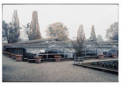 (schlomo jawotnik) Tags: 2019 november hannover herrenhäusergärten berggarten gewächshaus kies töpfe bäume beet misteln park analog film kodak kodakportra160 usw