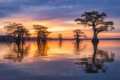 Band of Brothers (Hilton Chen) Tags: louisiana atchafalayabasin sunrise cypresstrees reflection bayou swamp landscape nature silhouette colorfulsky goldenlight