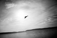 Don't do it like Icarus (stefankamert) Tags: sky sun bird ikarus icarus water clouds landscape lakeconstance bodensee überlingen stefankamert sony rx1r rx1 fullframe mirrorless noir noiretblanc blackandwhite blackwhite 35mm zeiss