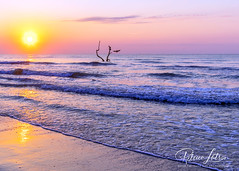 Pelican Sunrise, Padre Island National Seashore (Where The Trails Take You Photography) Tags: canon 5ds 24mm prime sunrise morning silhouette bird gulfofmexico seashore beach padreislandnationalseashore texas outdoors summer june wherethetrailstakeyou