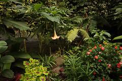 Waterfalls Trek - Munduk - Bali (Nicocoalala) Tags: canon 80d sigma 1020mm nature green trek hiking plants bali indonesia munduk voyage flowers travel