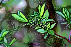 Spring leaves - DDG art (EOSXTi) Tags: ddg spring leaves abstract art