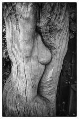 Boomvrouw (Hans Heemsbergen) Tags: hansheemsbergen sonyrx100 naakt boom zwartwit bw