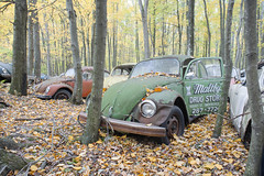 VW Graveyard (Jonnie Lynn Lace) Tags: abandoned abandonedamerica america american vintage usa unitedstates exterior outside woods forest trees green red yellow fall autumn automne leaves classic history time memories decay derelict rust vw beetle volkswagen old historic beautiful colours colorful contrast nikkor nikon d750 24mm digital flickr exploration explore explorer urbex lost lostplace ruins ruinas relics naturetakesover nature natur bright