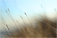 transitions (Fr@ηk ) Tags: mrtungsten62 frnk europe domburg ef1885mm canon6d bokeh mood atmosphere adult nudity grass wheat plant sky reed nature weed wind sun blur grassfamily lawn field phragmites macrophotography fog light dawn closeup agropyron stockphotography vegetation poales weather fairweather photography mist outdoors summer smoke rural droplet color beacon noperson lighthouse rain bud fall sprout sunset grain abstract vegetable food produce tick pollution boardwalk bridge zeeland