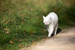 Merian Gardens 10-12-2019 007 (swissnature3) Tags: garden park switzerland basel münchenstein animals cat
