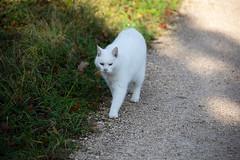 Merian Gardens 10-12-2019 005 (swissnature3) Tags: garden park switzerland basel münchenstein animals cat