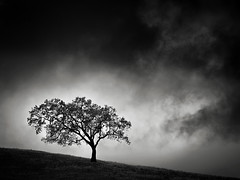 Another Tree in November (StefanB) Tags: cloud 2018 em5 45200mm tree mood outdoor treescape california november calerocountypark