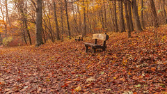 Budakeszierdo (Behind Budapest) Tags: 2019 365project 70d budakeszierdo budapest canon hungary magyarorszag normafa autumn autumnfoliage bench city colour erdo fall forest landscape nature outdoor outdoors outside termeszet town urban woods