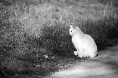 Merian Gardens 10-12-2019 006 (swissnature3) Tags: garden park switzerland basel münchenstein animals cat