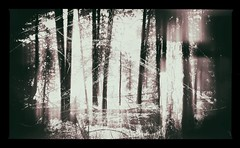 Be Thou my vision (Crusty Da Klown) Tags: okanaganmountainprovincialpark britishcolumbia canada bc bw black white monochrome forest trees nature outside outdoors scene scenery frame canon film texture contrasts vignette exploring dream hike presence light vision