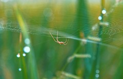 The web designer! (clicksnframes) Tags: bokeh landscape india 70d canon green nature web spider